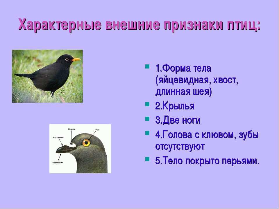 Характерные внешние признаки птиц: 1.Форма тела (яйцевидная, хвост, длинная ш...