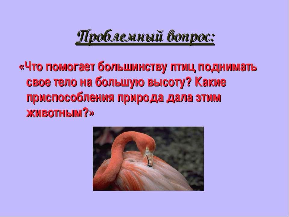 Проблемный вопрос: «Что помогает большинству птиц поднимать свое тело на боль...