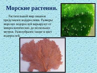 Морские растения. Растительный мир океанов представлен водорослями. Размеры м...