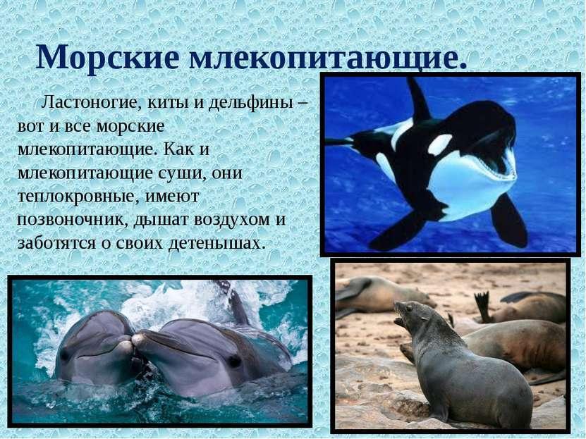 Морские млекопитающие. Ластоногие, киты и дельфины – вот и все морские млекоп...