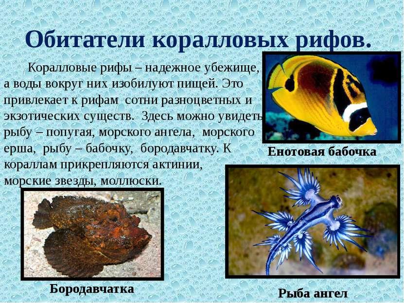 Обитатели коралловых рифов. Коралловые рифы – надежное убежище, а воды вокруг...