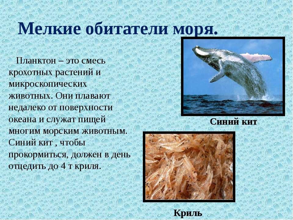 Мелкие обитатели моря. Планктон – это смесь крохотных растений и микроскопиче...