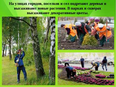 На улицах городов, поселков и сел подрезают деревья и высаживают новые растен...
