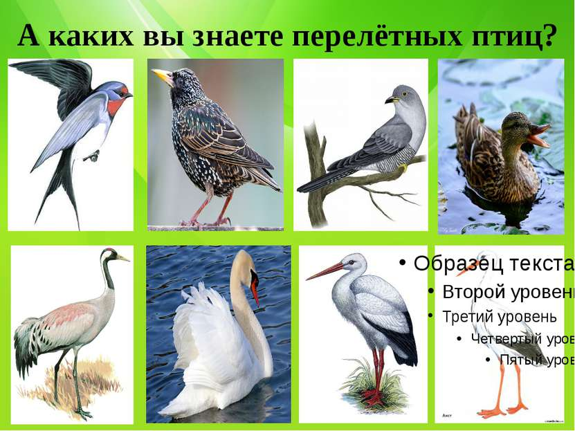 А каких вы знаете перелётных птиц?