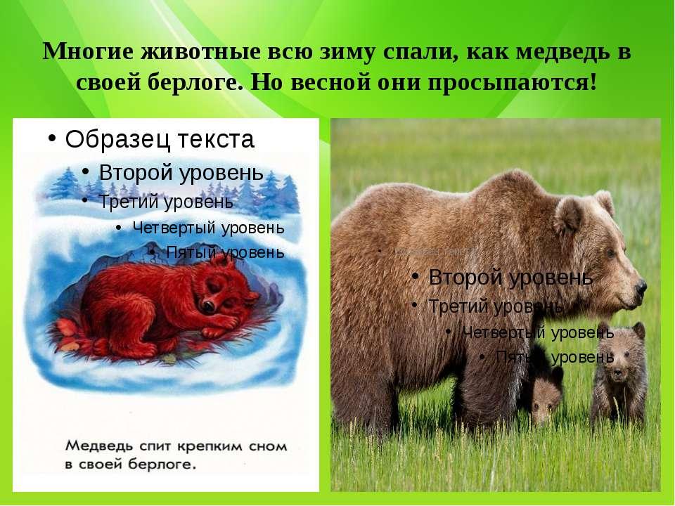 Многие животные всю зиму спали, как медведь в своей берлоге. Но весной они пр...