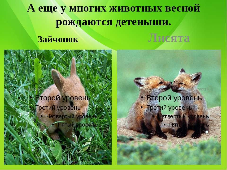 А еще у многих животных весной рождаются детеныши. Зайчонок Лисята