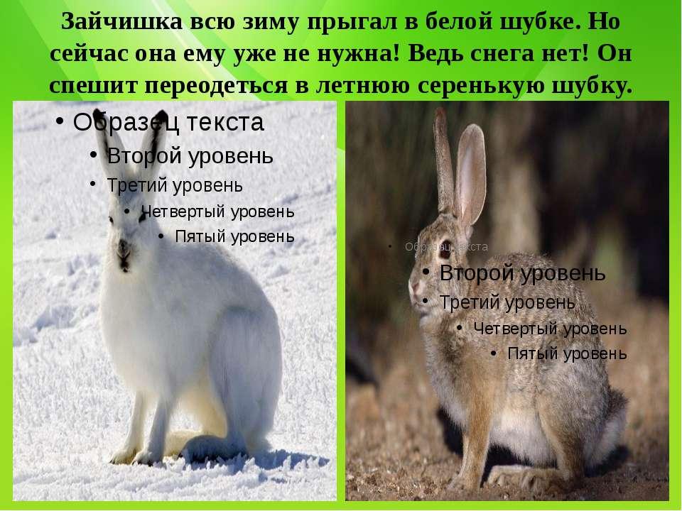Зайчишка всю зиму прыгал в белой шубке. Но сейчас она ему уже не нужна! Ведь ...