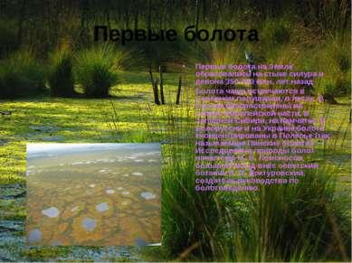 Первые болота Первые болота на Земле образовались на стыке силура и девона 35...