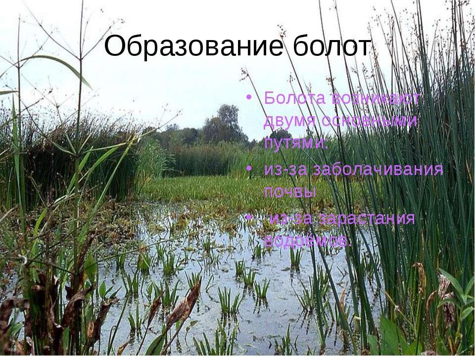 Образование болот Болота возникают двумя основными путями: из-за заболачивани...