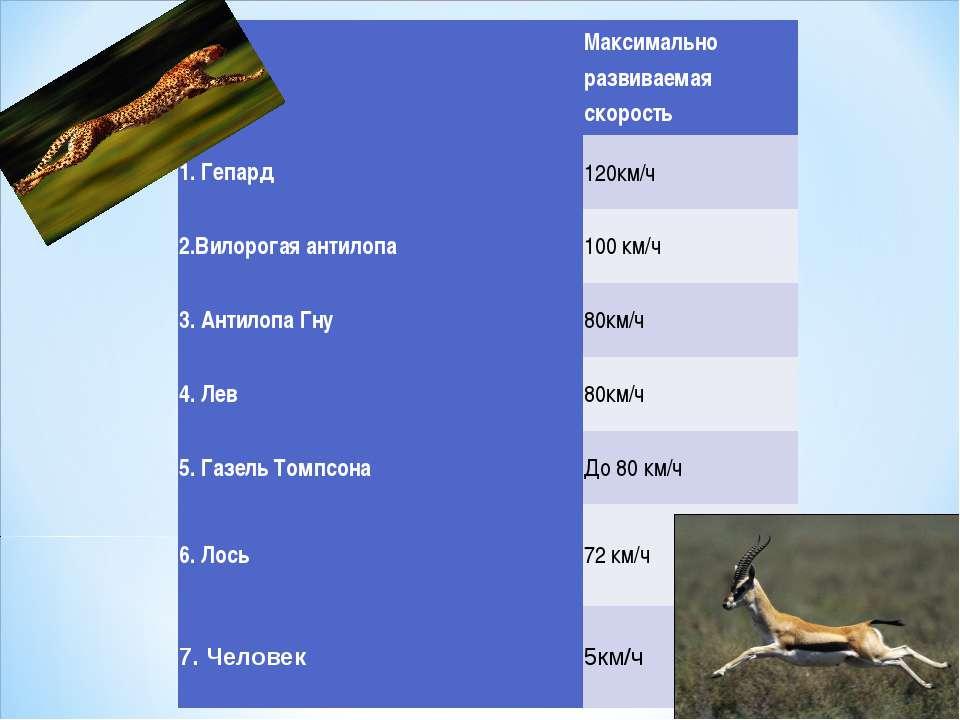 № Максимально развиваемая скорость 1. Гепард 120км/ч 2.Вилорогая антилопа 10...
