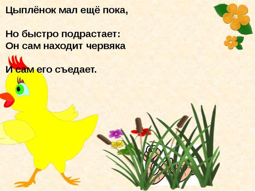 Цыплёнок мал ещё пока, Но быстро подрастает: Он сам находит червяка И сам его...