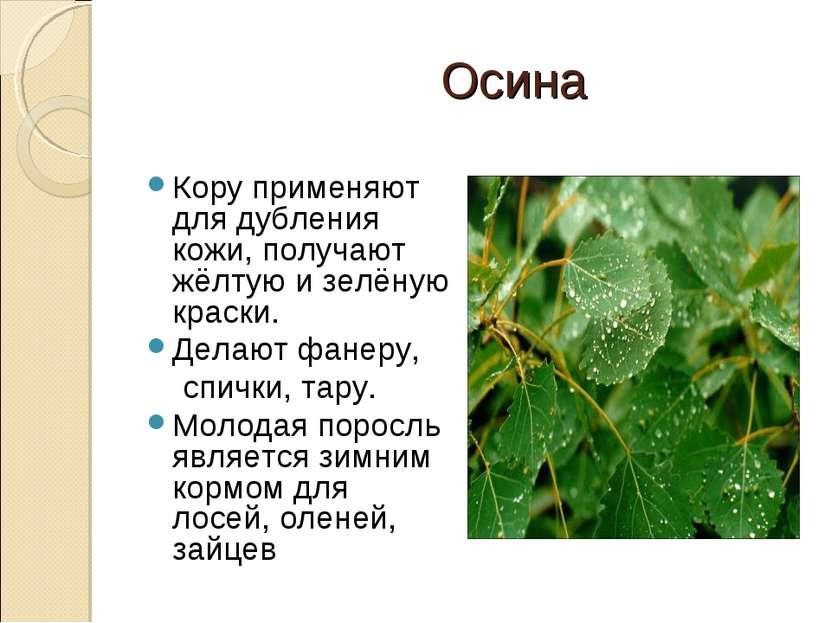 Осина Кору применяют для дубления кожи, получают жёлтую и зелёную краски. Дел...