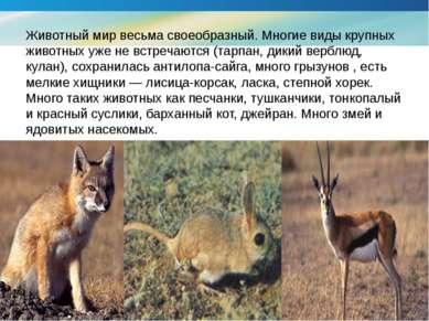 Животный мир весьма своеобразный. Многие виды крупных животных уже не встреча...