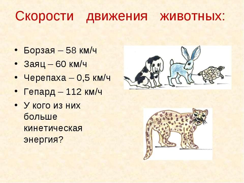 Скорости движения животных: Борзая – 58 км/ч Заяц – 60 км/ч Черепаха – 0,5 км...