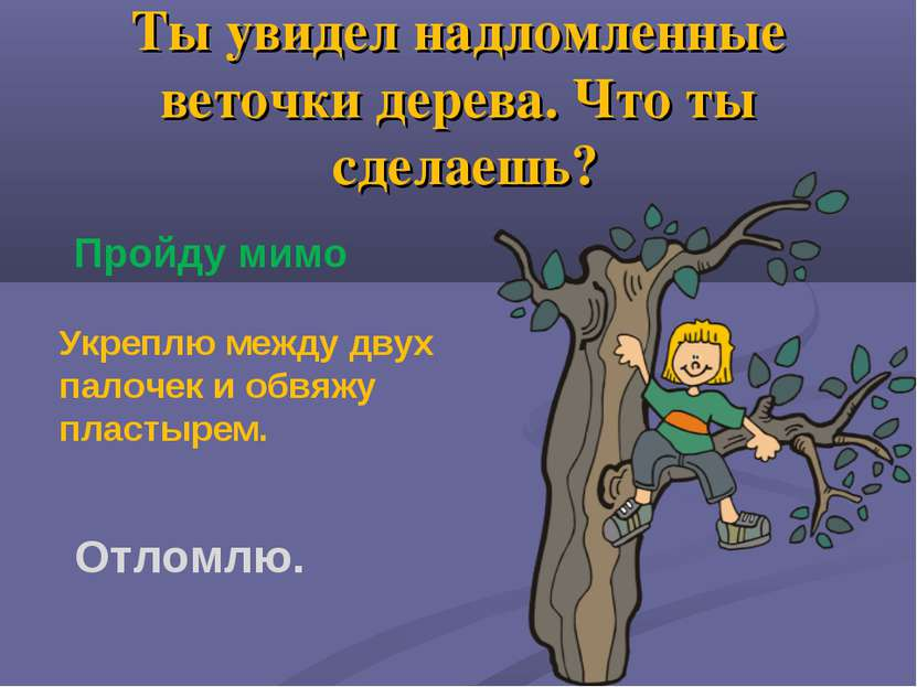 Ты увидел надломленные веточки дерева. Что ты сделаешь? Пройду мимо Укреплю м...