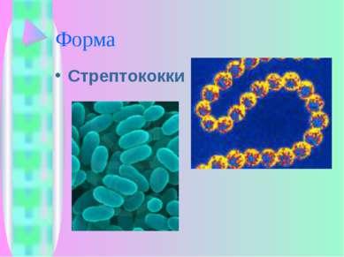Форма Стрептококки