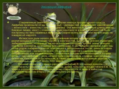 Современные земноводные – остатки некогда процветавшего класса. Амфибии произ...
