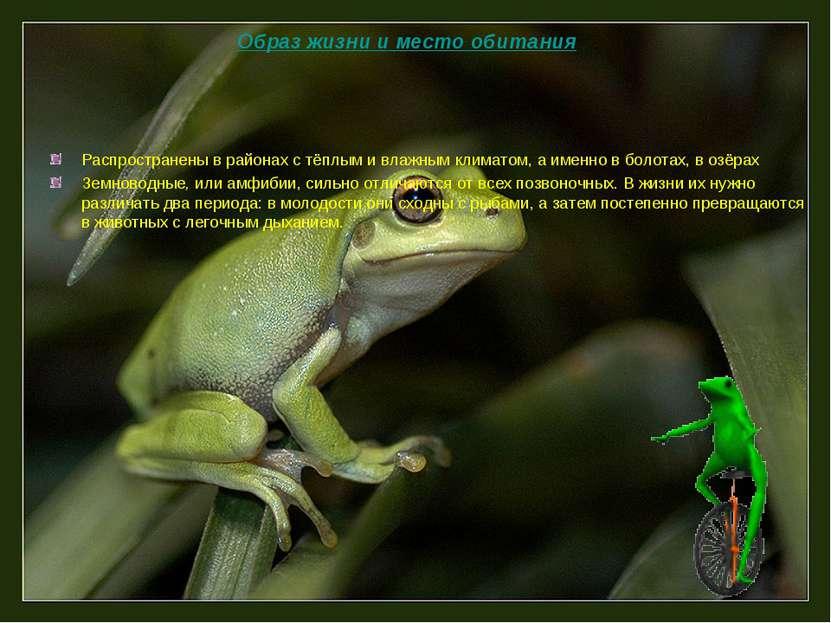 Распространены в районах с тёплым и влажным климатом, а именно в болотах, в о...