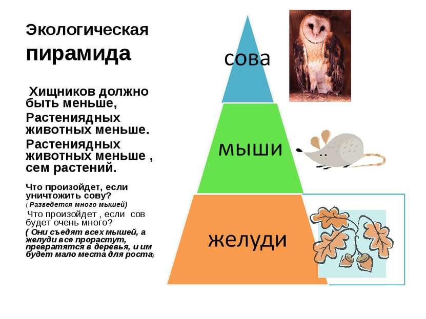 Экологическая пирамида Хищников должно быть меньше, Растениядных животных мен...