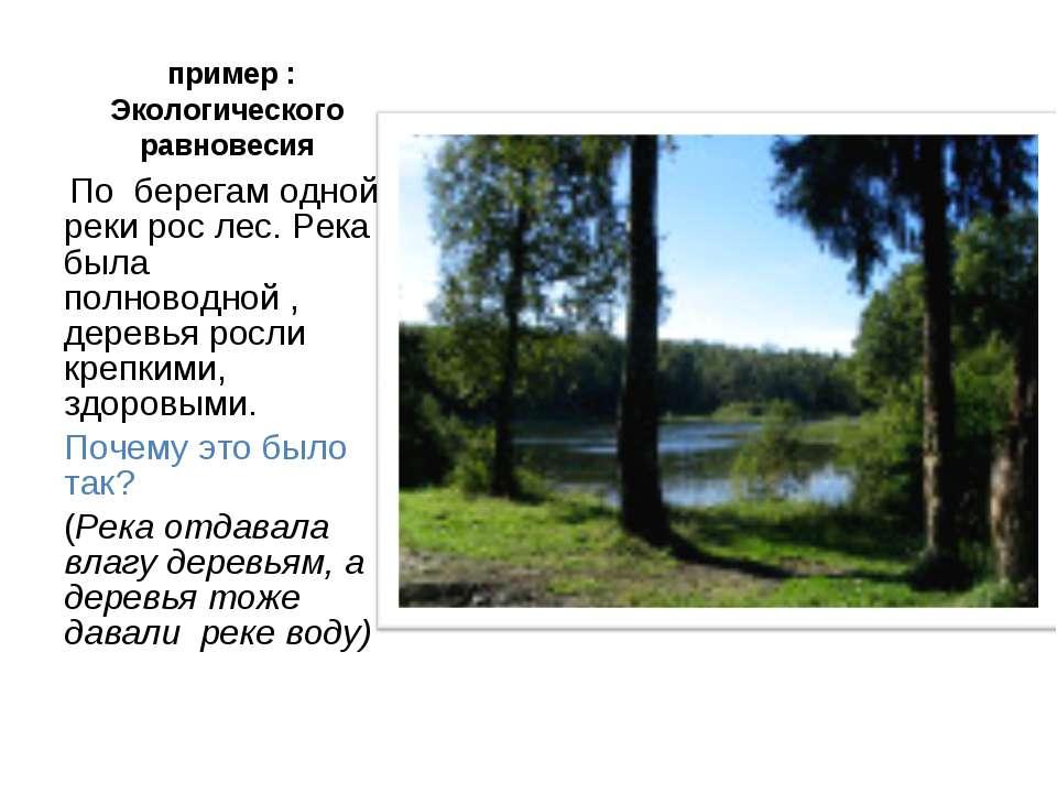 пример : Экологического равновесия По берегам одной реки рос лес. Река была п...