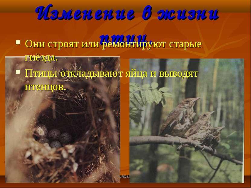 Анатольева Э.В. Изменение в жизни птиц. Они строят или ремонтируют старые гнё...
