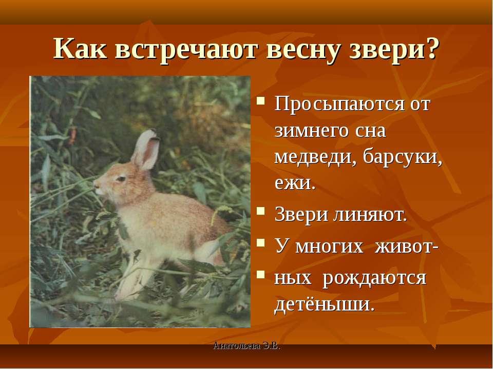 Анатольева Э.В. Как встречают весну звери? Просыпаются от зимнего сна медведи...
