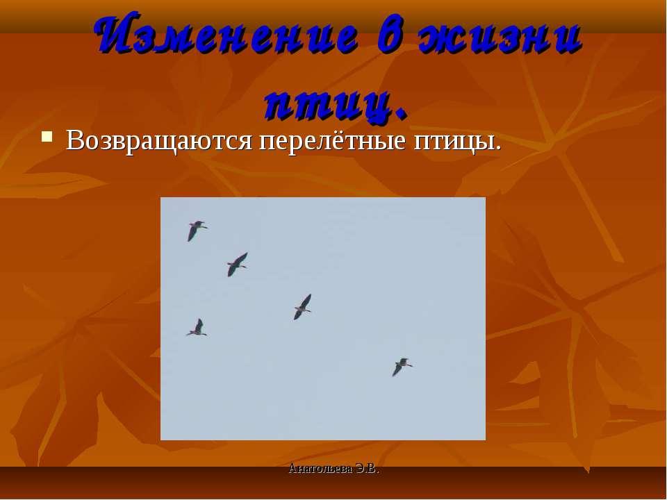 Анатольева Э.В. Изменение в жизни птиц. Возвращаются перелётные птицы. Анатол...