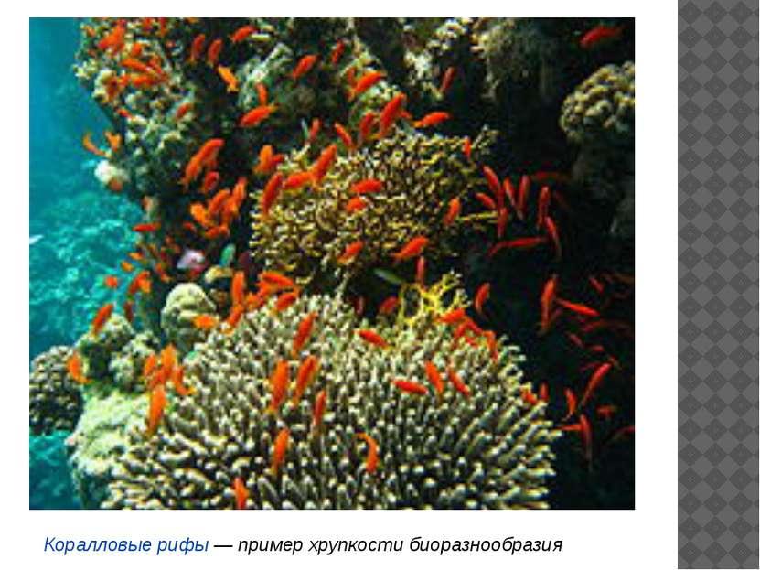 Различные положения равновесия систем (иллюстрация) У экосистем существует мн...