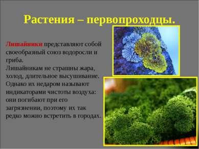 Растения – первопроходцы. Лишайники представляют собой своеобразный союз водо...