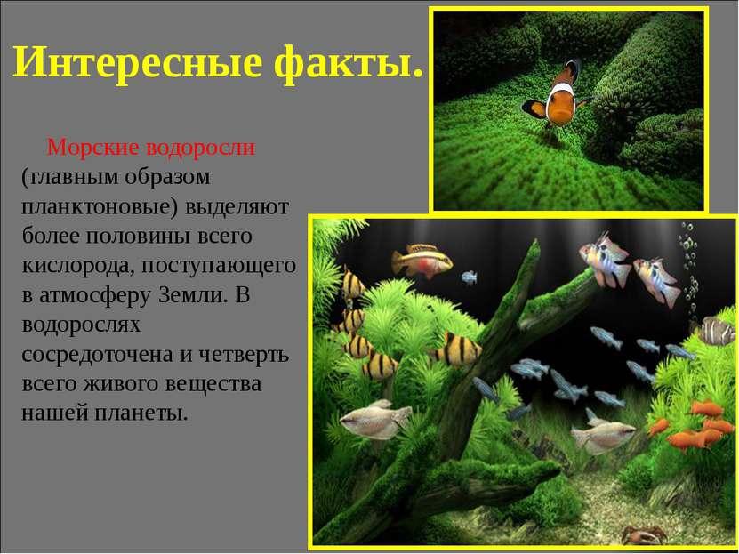 Интересные факты. Морские водоросли (главным образом планктоновые) выделяют б...