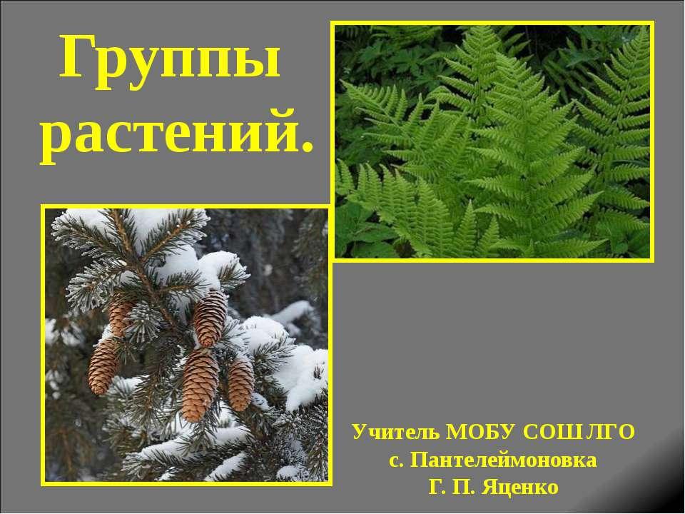 Группы растений. Учитель МОБУ СОШ ЛГО с. Пантелеймоновка Г. П. Яценко