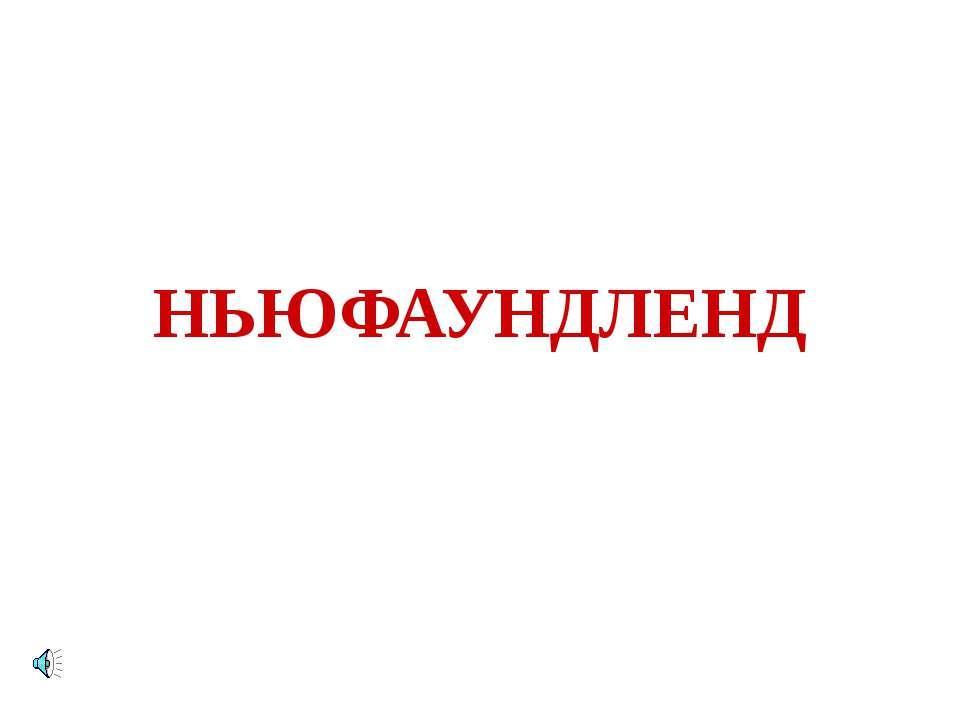 НЬЮФАУНДЛЕНД