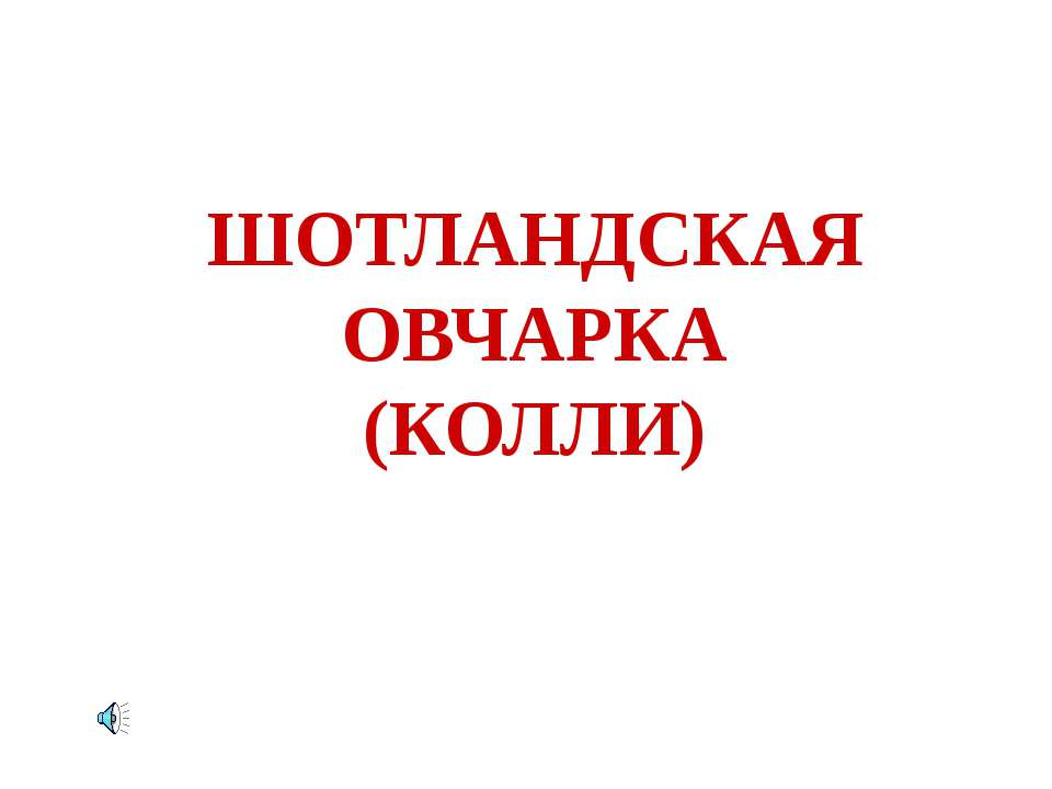 ШОТЛАНДСКАЯ ОВЧАРКА (КОЛЛИ)