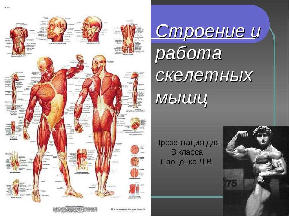 Строение и работа скелетных мышц Презентация для 8 класса Проценко Л.В.