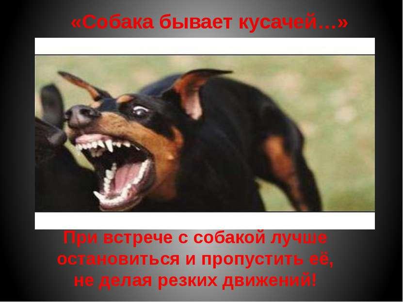 «Собака бывает кусачей…» Не трогай животных, когда они едят! Не трогай щенков...
