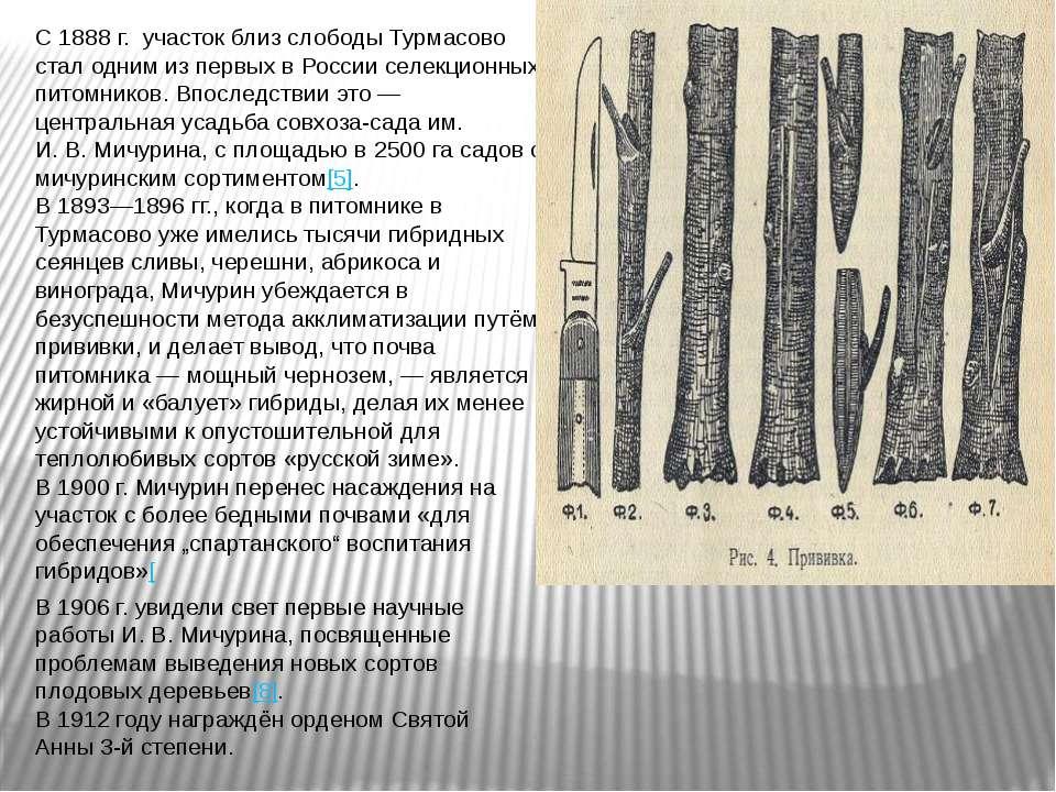 С 1888г. участок близ слободы Турмасово стал одним из первых в России селекц...