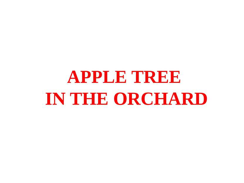 APPLE TREE IN THE ORCHARD