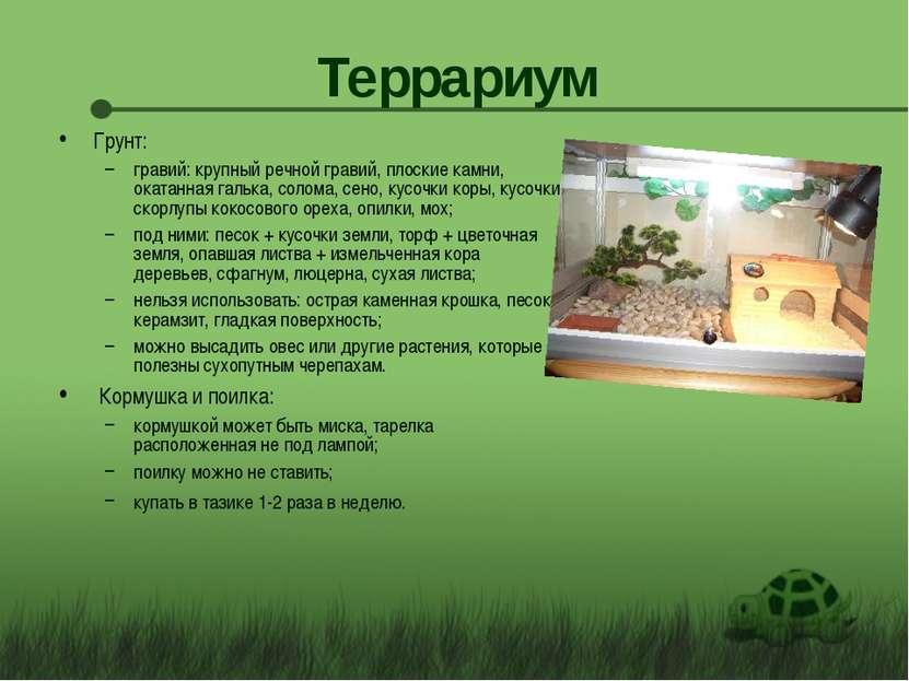 Террариум Грунт: гравий: крупный речной гравий, плоские камни, окатанная галь...