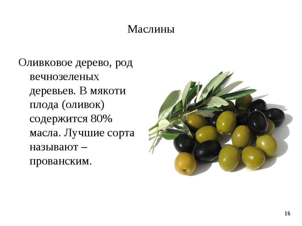 Маслины Оливковое дерево, род вечнозеленых деревьев. В мякоти плода (оливок) ...