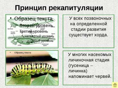 Генетические доказательства Эти доказательства позволяют уточнить филогенетич...