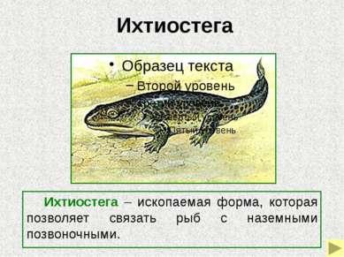 Археоптерикс (первоптица) Археоптерикс – переходная форма от рептилий к птица...