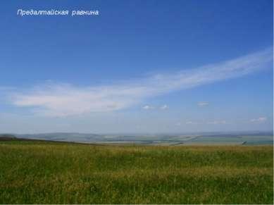 Предалтайская равнина