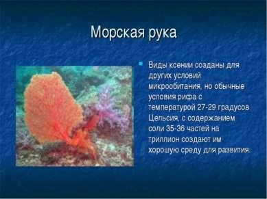 Морская рука Виды ксении созданы для других условий микрообитания, но обычные...
