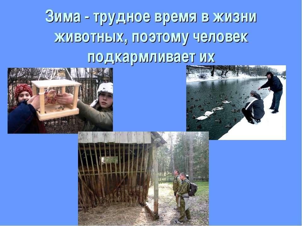 Животные Зимой Презентация