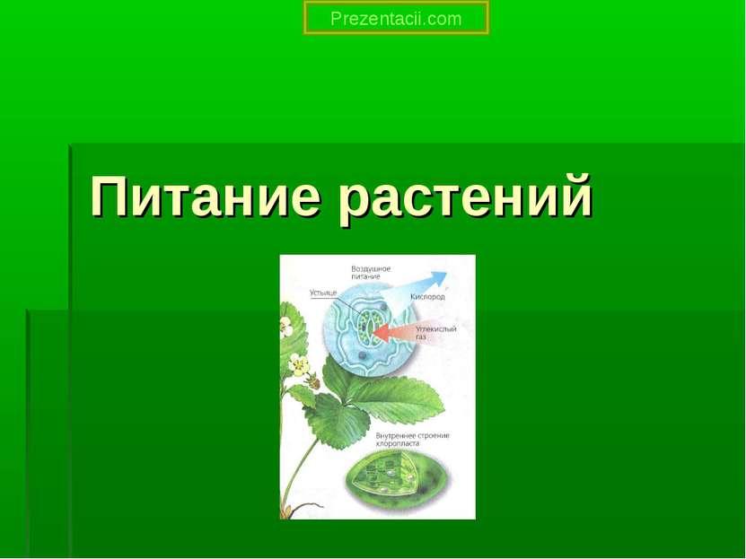 Питание растений Prezentacii.com