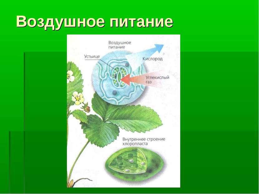 Воздушное питание