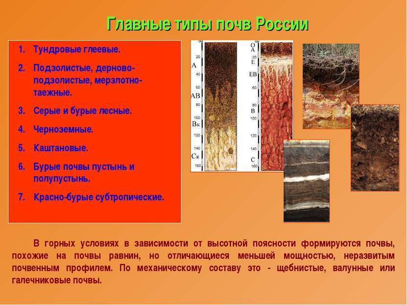 Главные типы почв России Тундровые глеевые. Подзолистые, дерново-подзолистые,...