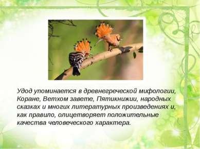 Удод упоминается в древнегреческой мифологии, Коране, Ветхом завете, Пятикниж...