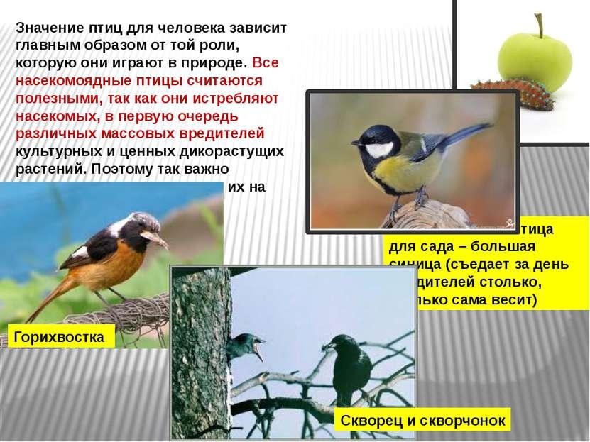 Значение птиц для человека зависит главным образом от той роли, которую они и...