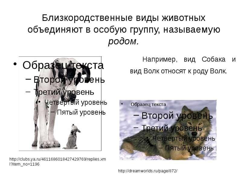 Например, вид Собака и вид Волк относят к роду Волк. http://dreamworlds.ru/pa...